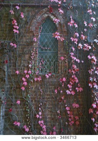 Vines On Church Wall