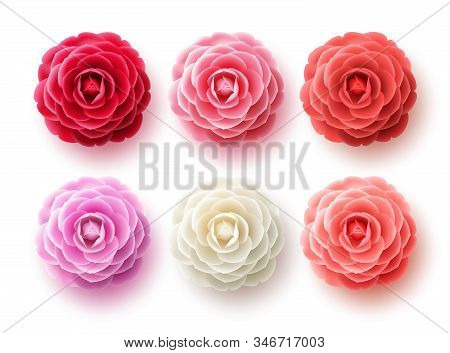 Camellia Flowers Vector Set. Camellia And Rose Flower Collection For Spring With Various Colors For