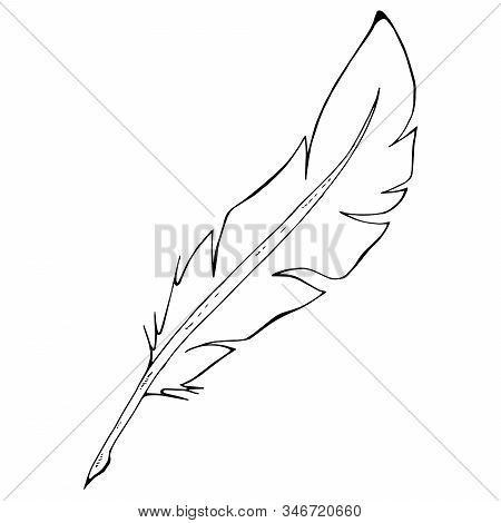Feather Pen Icon. Vector Illustration Of A Feather For Calligraphy. Hand Drawn Feather Pen Logo.