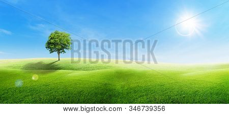 Beautiful Landscape View Of Alone Green Tree With Grass Natural Meadow Field And Little Hill With Ti