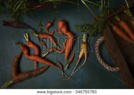 Weirdly Shaped Fresh  Root Vegetables On Dark Blue Rustic Background