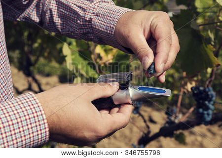 Caucasian Man Hands In A Vineyard Testing Red Grape With Device. Selective Focus