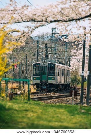 Tohoku Train With Full Bloom Of Sakura