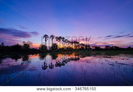 The Silhouette Of The Toddy Palms Or Sugar Palm In The Field With The Colorful Sky After Sunset Back