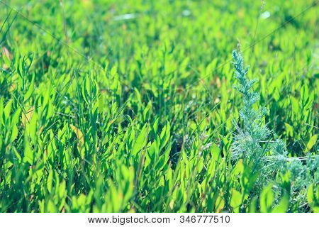 Blurrred Image Of Green Meadow.  Abstract Nature Background. Cropped Shot Of Summer Field.