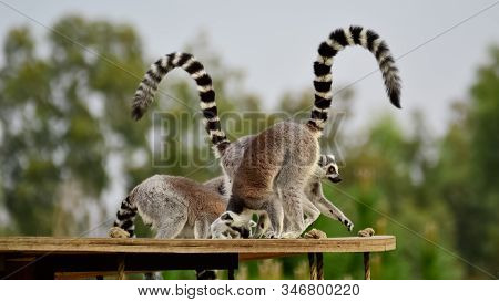 Photos Of Wild Animals And Ring-tailed Lemurs