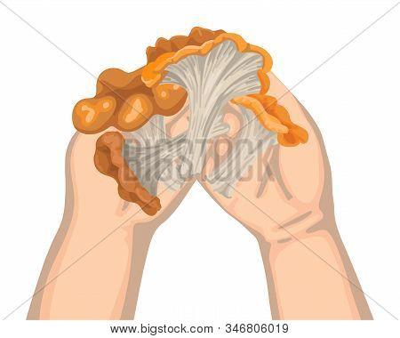 Mushrooms In Children Hands. Harvest The Autumn Harvest. Vector Illustration