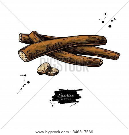 Licorice Roots Vector Drawing. Botanical Illustration. Herbal