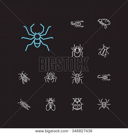 Bug Icons Set. Fly And Bug Icons With Tarantula, Pest And Aphid. Set Of Arachnophobia For Web App Lo