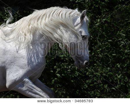 A white stallion mane in the sun
