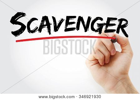 Scavenger - Text With Marker, Concept Background