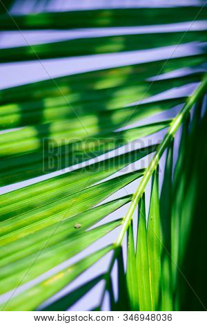Abstract Floral Blurred Background. Tropical Palm Leave Macro Photography. Beautiful Backdrop For Fo