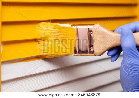 Closeup Woman Hand In Purple Rubber Glove With Paint Brush Painting Natural Wooden Door With Yellow