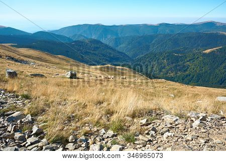 Sheeps Graze On Alpine Plateau In The Carpathian Mountains, Romania. View Of Transalpina Tourist Hig