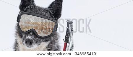 Funny Dog In Ski Mask On Gray Background. Ski Resort Background.