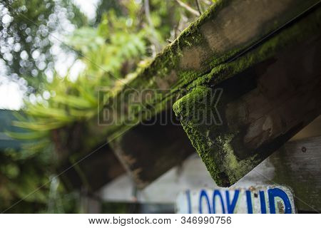 Green Moss Grows On The Edge Of A Rafter That Is Holding Up A Living Roof.