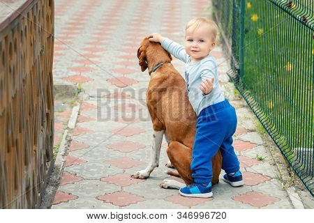 Cute Caucasian Toddler Boy Hugging And Petting Old Pointer Dog During Walk At Backyard On Bright Sun