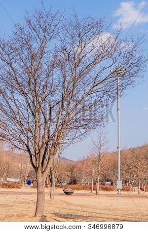 Leafless Tree Hibernating Through Winter In Rural Park With Loud Speakers On Tall Metal Pole In Back