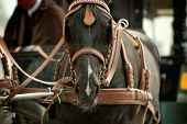 horse in carriage closeup in old fashioned style poster