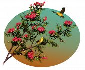 a decorative illustration with two Hawaiian birds poster