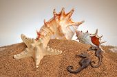 Seashells starfish and hippocampuson a sand background poster