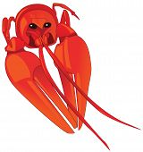 The boiled red cancer. The color illustration poster