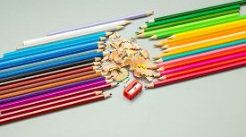 Multicolored Pencils With Sharpening And Chips On A Gray Background