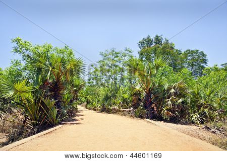 Landscape Tropical Red Gravel Drive Road Path