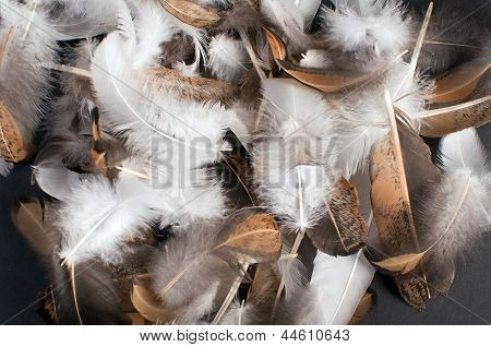 Pile Of Bird Feathers