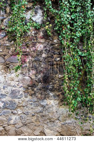 Wall  ??of River Stones With Ivy