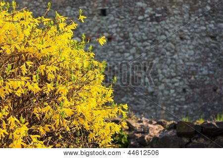 Yellow Bush Leaves On A Stone Wall