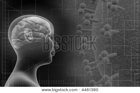 Human Brain In A Human Body