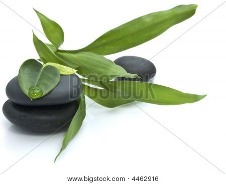 Stones With Green Leafs On The White Background