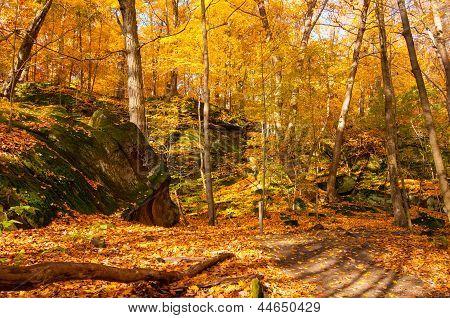 Ledges In A Golden Wood