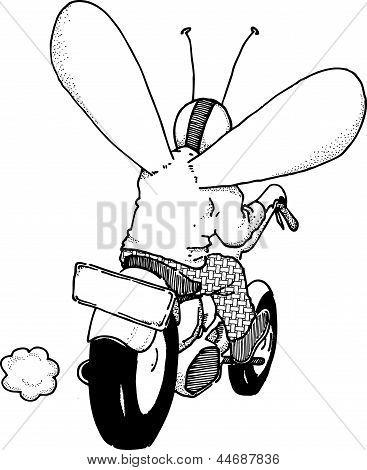 Biker Fly