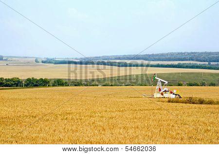 Grain Field With Oil Pump