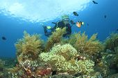 Scuba Diving on coral reef with anemonefish poster