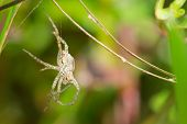 A hanging husk left over when a spider has shed its skin poster