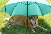 a Dog Sitting Under a Green Umbrella poster