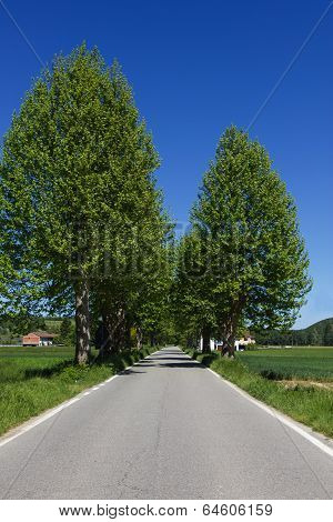 Tree Lined Country Road In Northern Italy