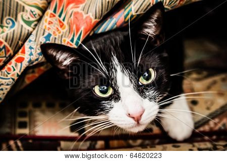 Black And White Cat Under Blankets On The Couch