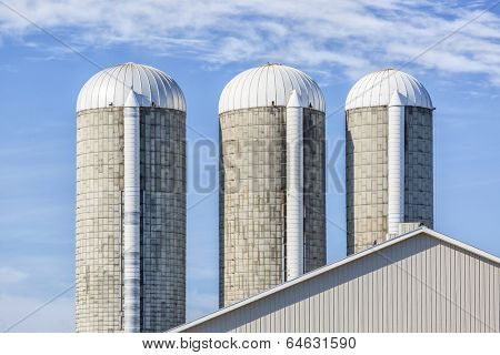 Farm forage silos to store silage for dairy cattle.  Silage can be comprised of grass, corn, hay or other materials.  poster