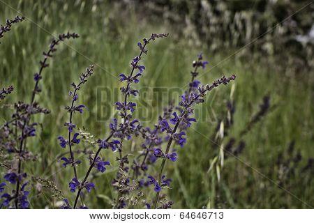 Purple Flower On Weeds Background