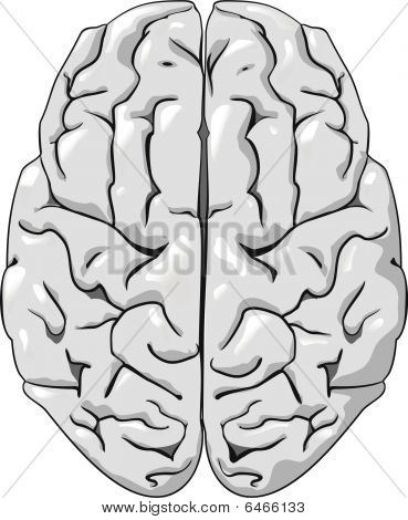 Human brain isolated on white as a concept of medicine poster
