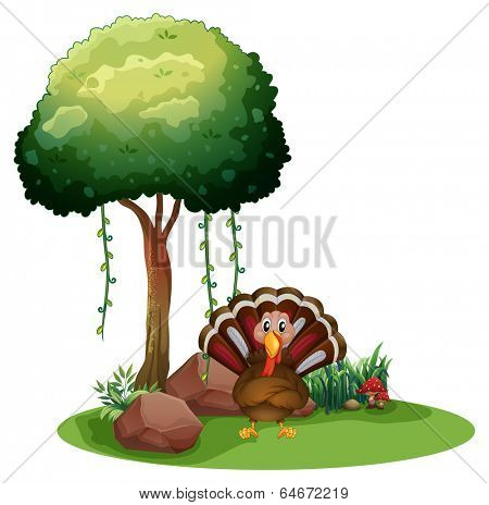 Illustration of a turkey near the rocks under the tree on a white background