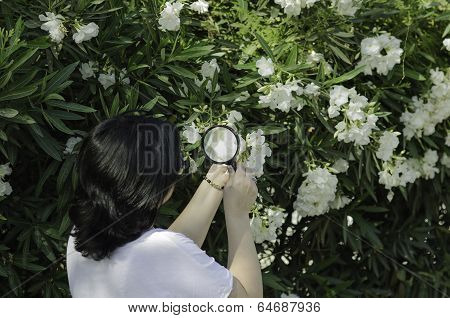 Botanist Watching The Oleander Flowers On The Tree