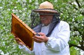 senior beekeeper making inspection in apiary in the springtime poster