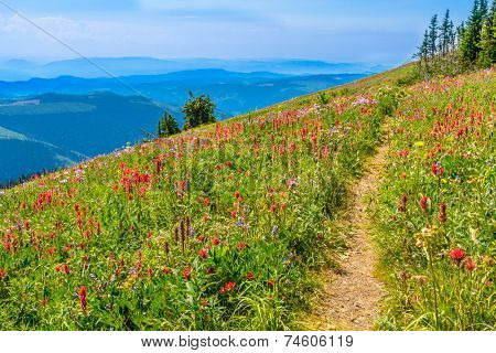 Trail to a mountain summit in British Columbia, Canada.