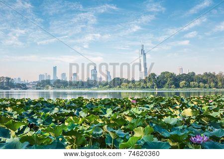 Nanjing Skyline And Lotus
