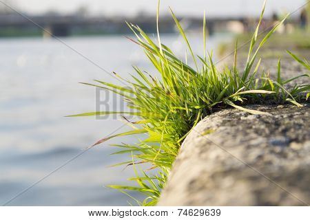 Grass on stone embankment in Moscow, Russia poster